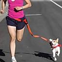 Röd / Vit / Grön / Rosa / Purpur - Infällbar - Nylon - Halsband - till Hundar / Katter
