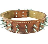 cody estilo etiqueta colar de couro de vaca para animais de estimação cães