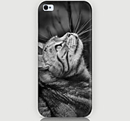 Look at the Cat Pattern Phone Case Back Cover Case for iPhone5C
