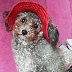 Gatos / Perros Bandanas y Sombreros Rojo / Negro / Azul / Rosado / Morado / Naranja Primavera/Otoño Boda / Cosplay