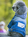 Dog Denim Jacket/Jeans Jacket Blue Dog Clothes Winter Spring/Fall Jeans Cowboy Fashion